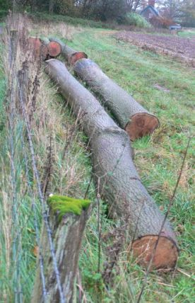 two ash trunks for sale
