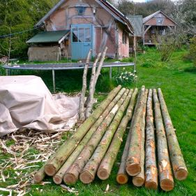 Conifer poles waiting to be stripped