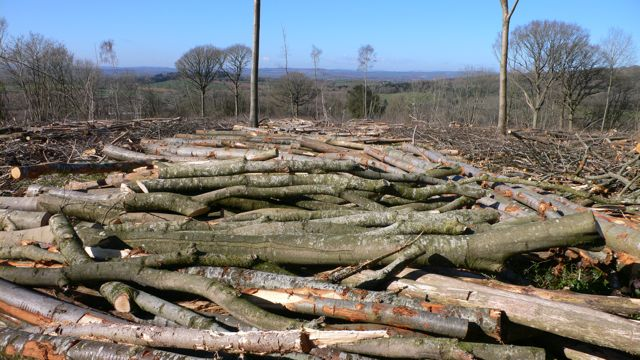 Part of the cycle of woodland management